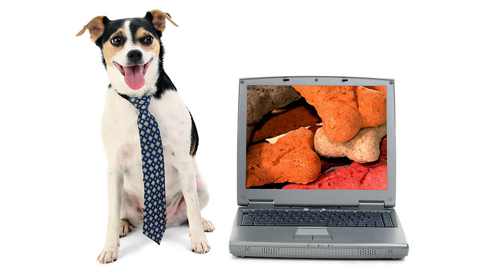 dogcomp