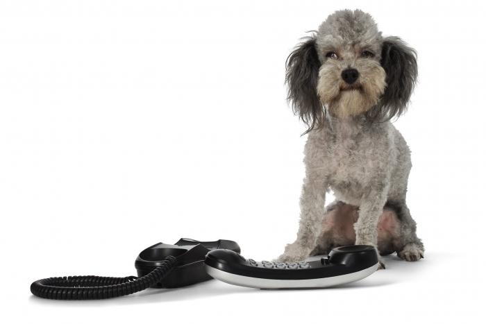 A fluffy grey dog sitting by a telephone.