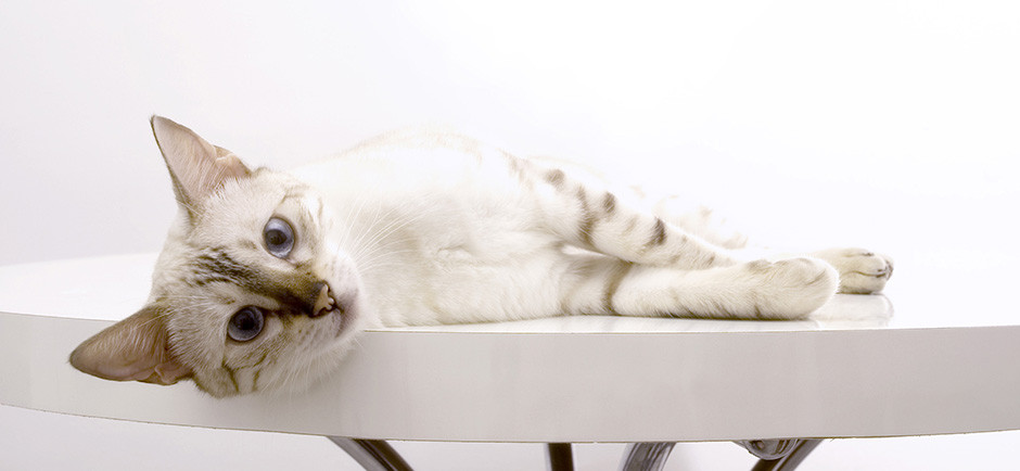 A white cat with blue eyes hanging out on a table.