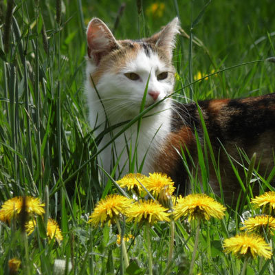 A white and orange cat sits among tall grass and yellow flowers. Photograph by Bianca Gümpel.