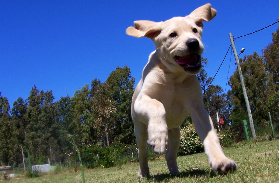 A small puppy running happily through a park.