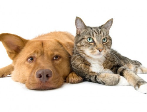 Dangerous substances: What to avoid giving your dogs and cats.